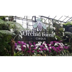 OUTBOUND ORCHID FOREST CIKOLE