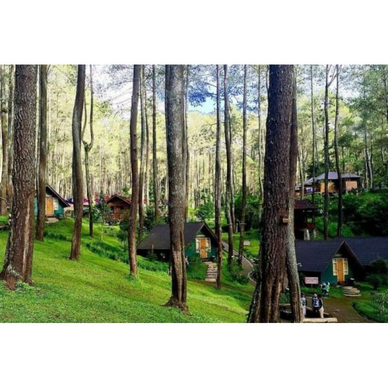 Tempat Wisata Grafika Cikole Di Lembang Outbond
